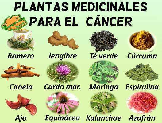 Plantas medicinales remedios caseros para el cancer, anticancerigenos naturales