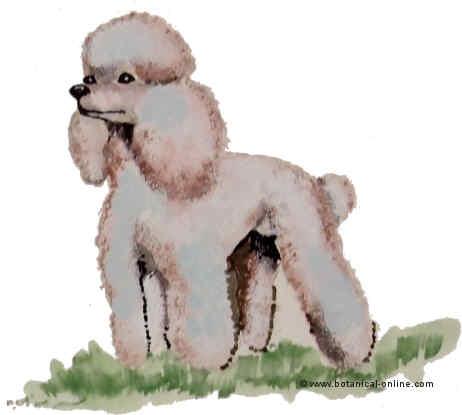 Dibujos De Razas De Perros