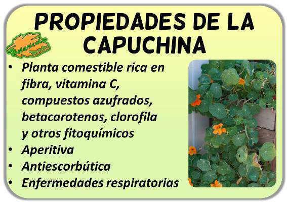 propiedades de la capuchina o mastuerzo y sus beneficios