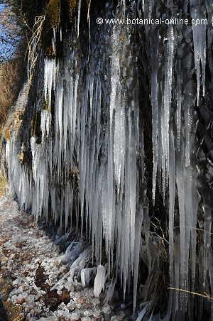 carambanos de hielo