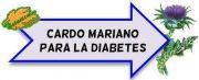 cardo mariano para la diabetes