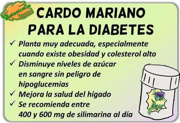 Propiedades medicinales del cardo mariano para el hígado