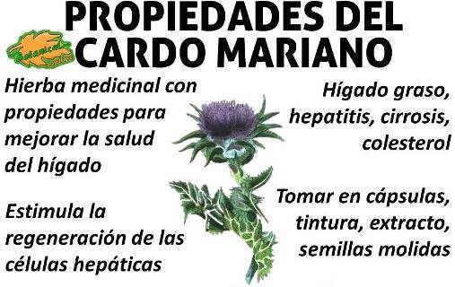 cardo mariano semillas propiedades