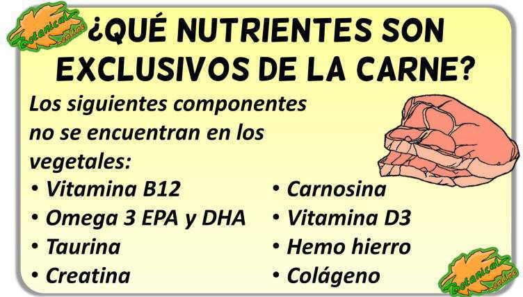 propiedades de la carne nutrientes esenciales exclusivos