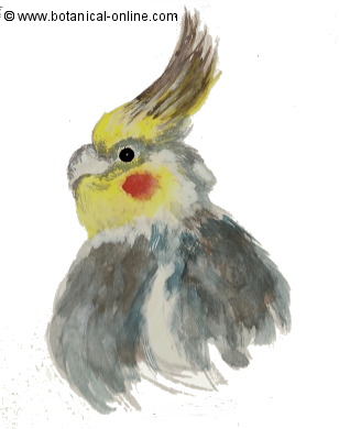 Comida pájaros exóticos