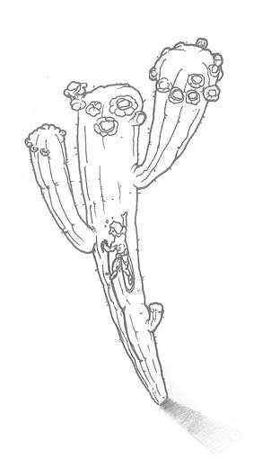 dibujo cactus