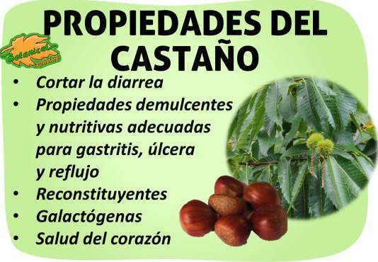 propiedades del castaño castanea sativa y castañas