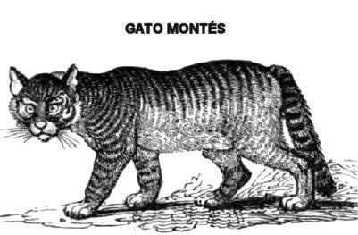cato-montess