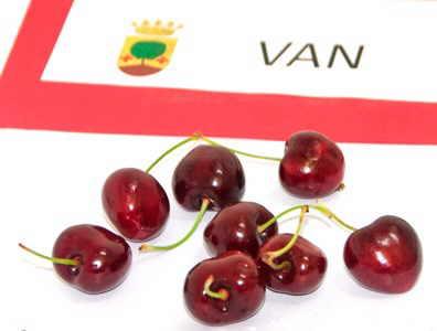 cereza tipos variedad Garrafal Van