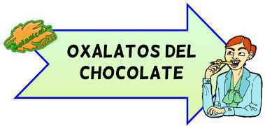 oxalatos del chocolate