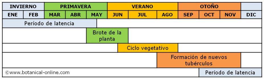 Calendario de cultivo de la chufa