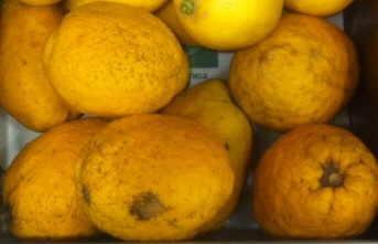 limon cidro citrus medica cedrei