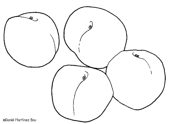 Dibujos De Frutas Botanical Online
