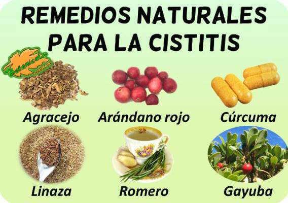cistitis plantas medicinales remedios suplementos tratamiento natural