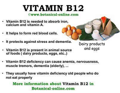 Vitamin B12 food