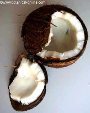 Open coconut seed