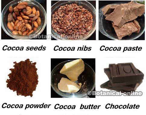 Different by-products of cocoa