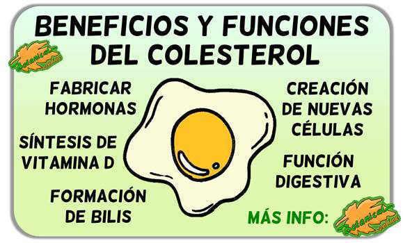 beneficios funciones colesterol en el cuerpo