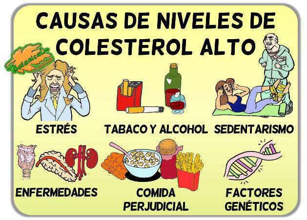 Causas del colesterol - Alimentos q producen colesterol ...