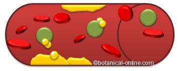 Dibujo representativo de la función del colesterol bueno