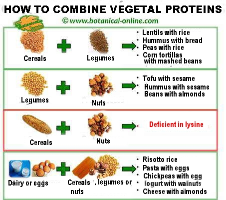 Protein combinations how plant proteins should be properly combined workwithnaturefo