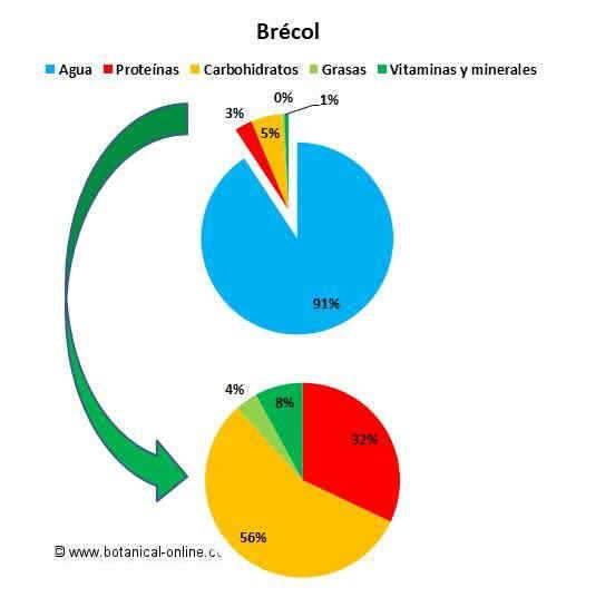 Composición del brécol