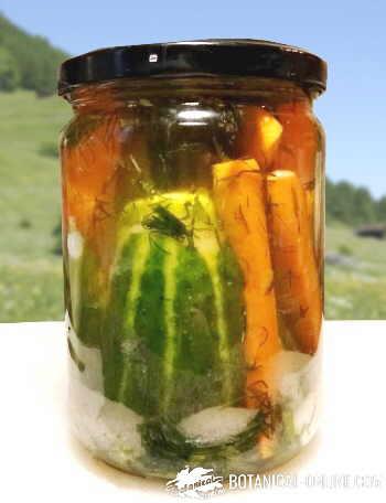 conserva de verduras encurtido