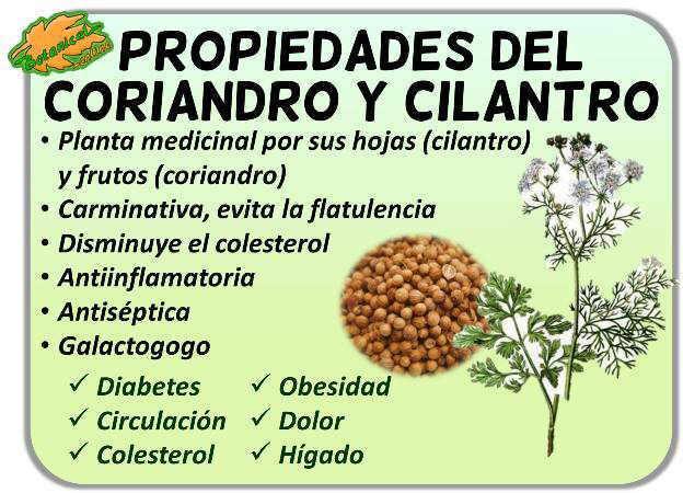 propiedades medicinales del perejil y el cilantro
