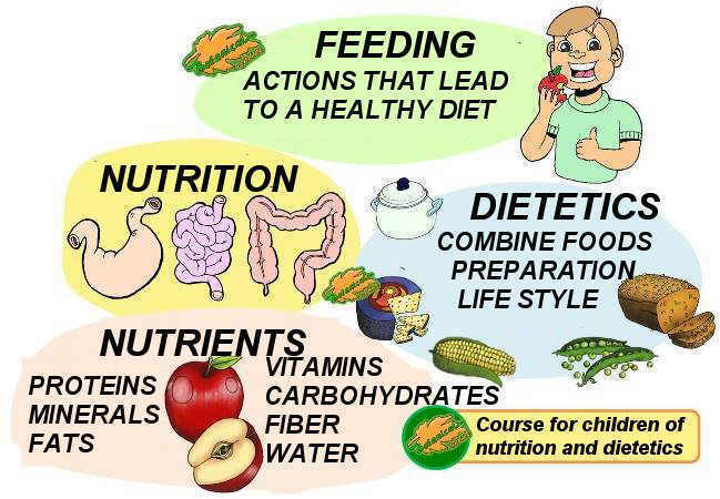 Definition of nutrition for children