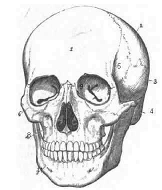 huesos cráneo