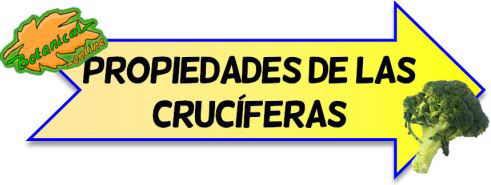 cruciferas