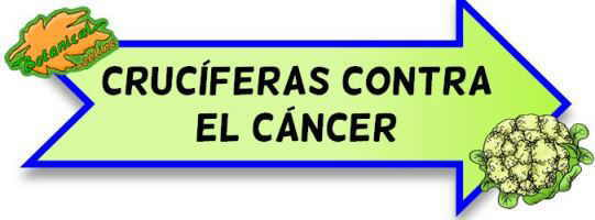 cruciferas contra cancer