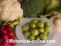 vegetales verduras y frutas de color verde para el higado