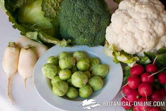 Photo of cruciferous: cabbage, radishes, turnips, Brussels sprouts, cauliflower and broccoli