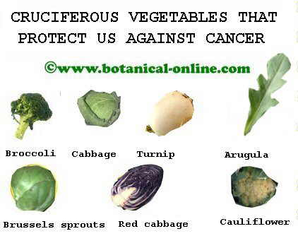 Cruciferous against cancer