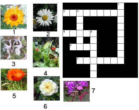Imagenes de crucigramas para imprimir imagui for Planta decorativa con propiedades medicinales crucigrama