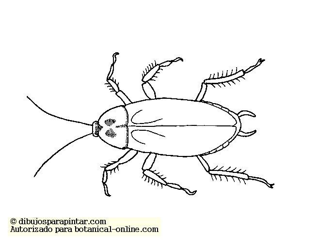 Caractersticas de las Cucarachas