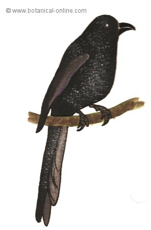 Dibujo de cuervo