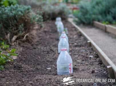 botellas plastico siembra germinación