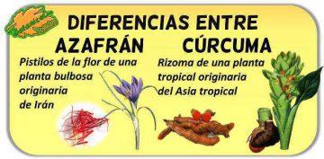 diferencias curcuma azafran