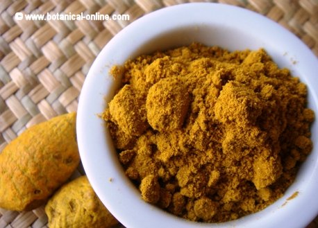 Root and powder of turmeric