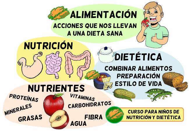 definicion nutricion dietetica alimentacion para niños