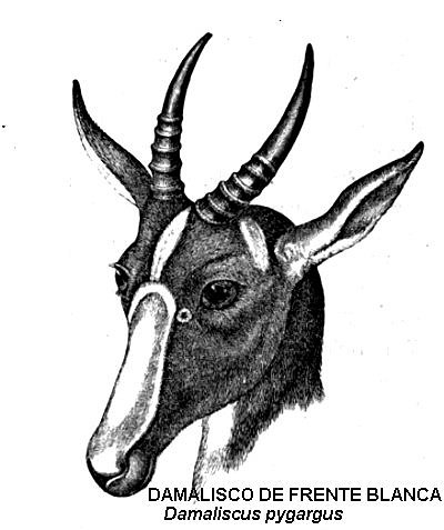 damalisco