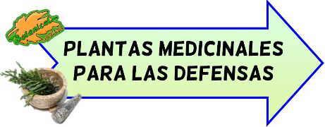 plantas medicinales para las defensas