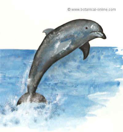 Dibujo de delfín