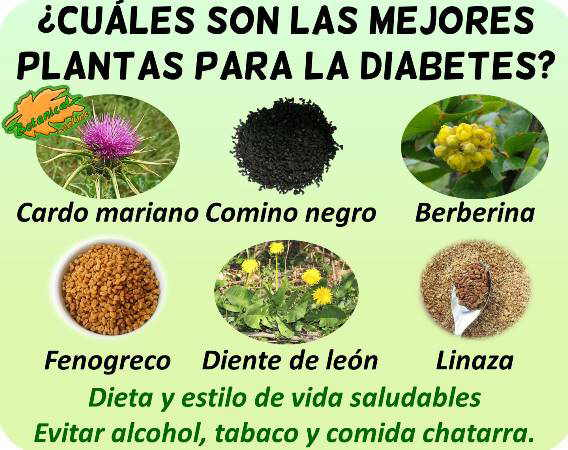 diabetes remedios con plantas medicinales curar tratamiento natural