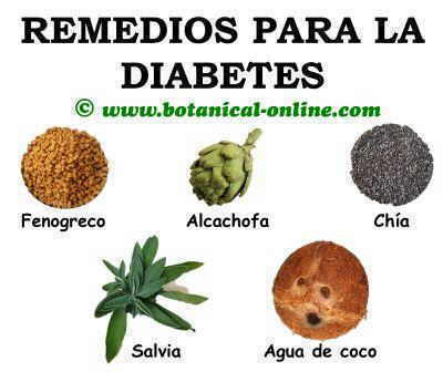 Plantas para la diabetes, remedios naturales