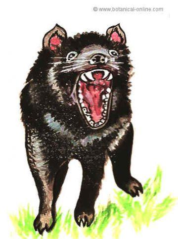Dibujo de diablo de Tasmania