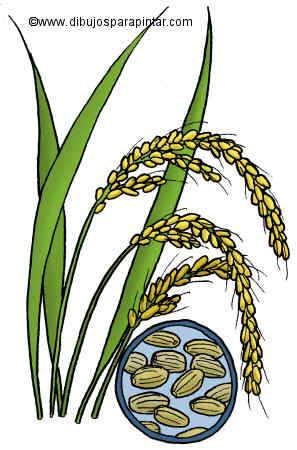 dibujo de arroz