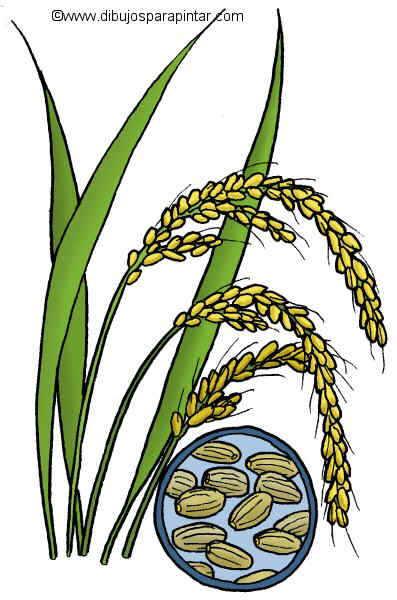 dibujo grande de arroz